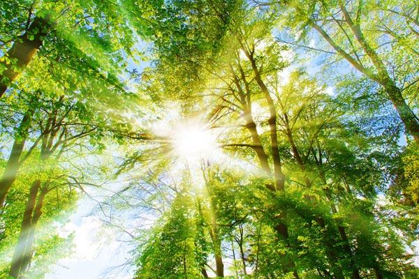 Do tác nhân ánh nắng mặt trời