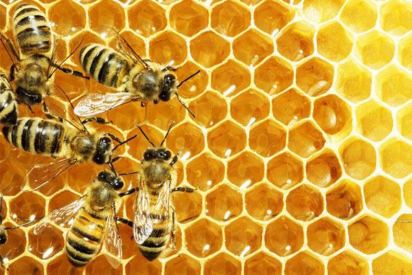 Vì sao mật ong có thể trị nám da?